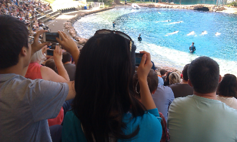 CNU students watching the dolphin display at SeaWorld, on the Australian Gold Coast.
