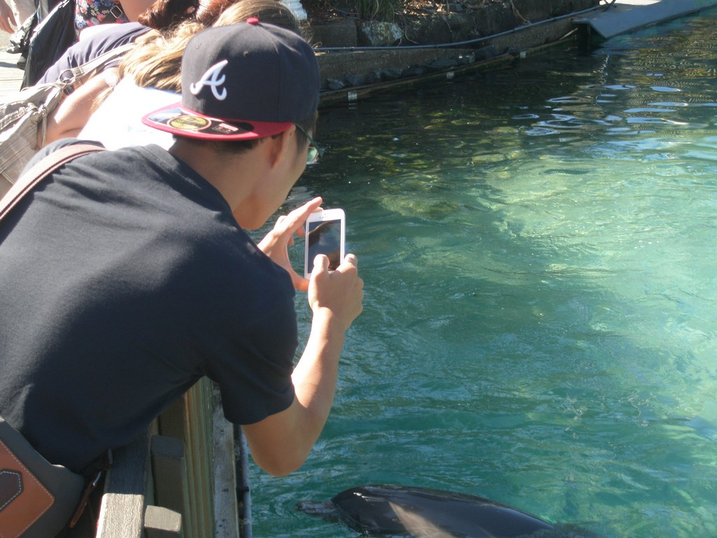 Jason Chen (Department of Pharmacy) gets a rare close up of dolphins at SeaWorld