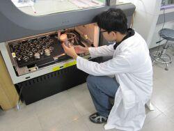 Liquid culture of fungal mycelium