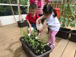 高雄市育兒資源中心進行幼兒食農教育