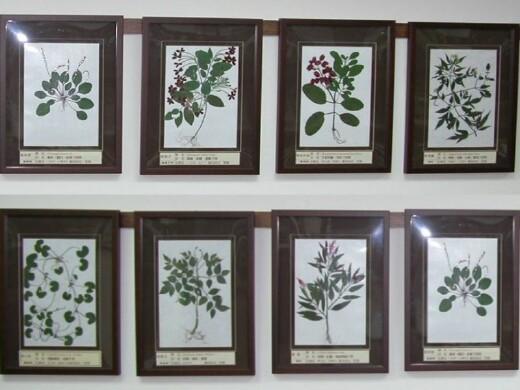 蠟葉標本展示區